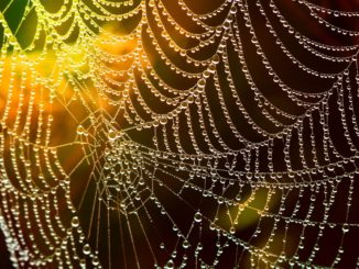 Cobweb Drop Of Water Network Lichtspiel Dewdrop